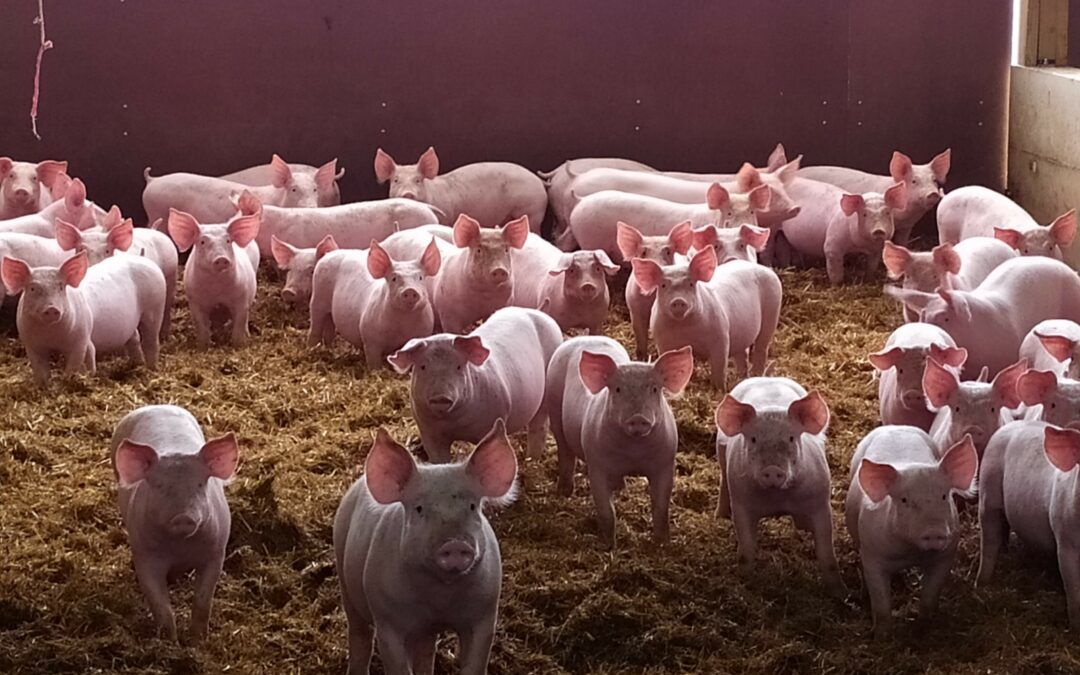 CO-FRESH: First visit of Actalia (WP4 leader) to the pigs farms (Pilot Case 4) in the frame of the project