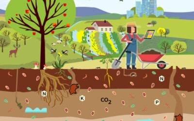 Soil health: Reaping the benefits of healthy soils, for food, people, nature and the climate