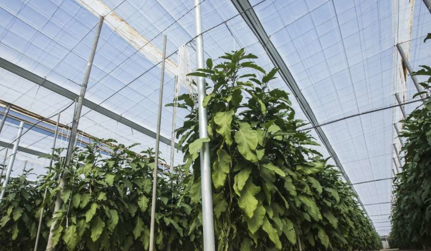 The 10 key facts of solar greenhouses in Europe